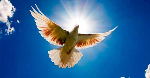 A Paz é uma escolha