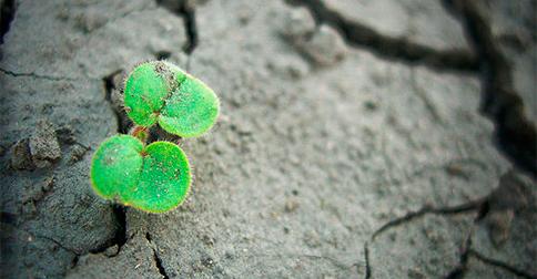 Mantenha viva a esperança em seu coração