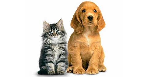 Arcanjo Metraton - A importância dos Felidae e Canidae