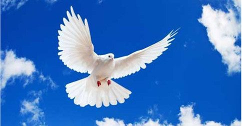 Arcanjo Zadkiel - Oásis de Paz