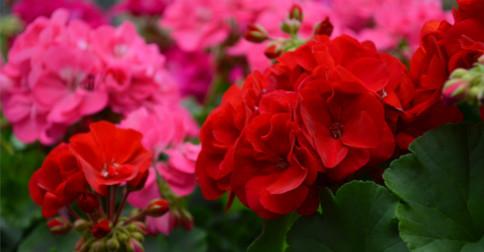 Floresça antes de partir