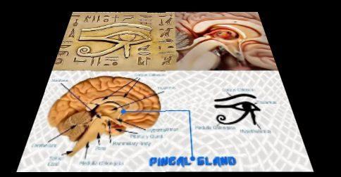 Sananda - está se ativando a união entre a glândula pineal e o ponto da alma