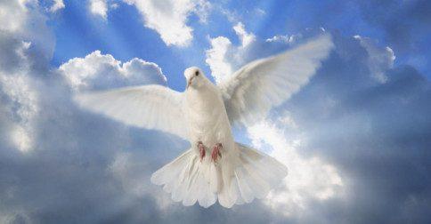 Decrete e afirme a paz de manifestá-la aqui na Terra!