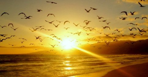 Liberdade! O grito eterno da alma!
