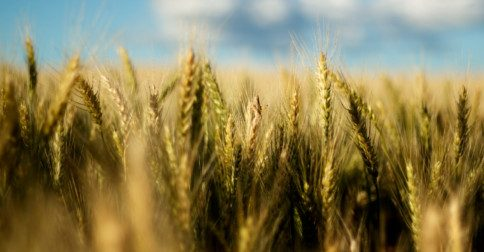 kryon - É preciso ter confiança para que a colheita aconteça