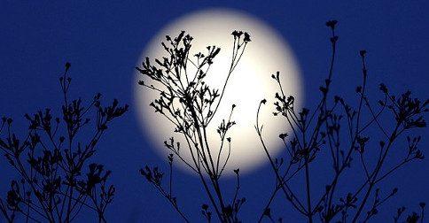 Próxima Lua Cheia - ciclos de nascimento e a morte