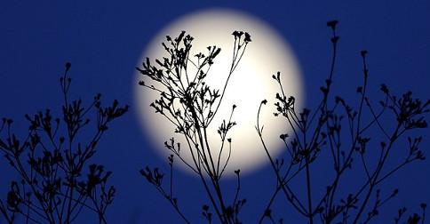 Próxima Lua Cheia – ciclos de nascimento e a morte
