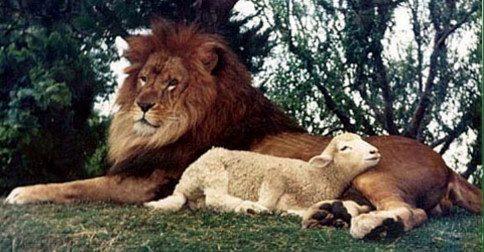 Quando o leão se deita com o cordeiro