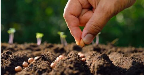 Jeshua - Vocês são os plantadores de sementes