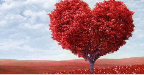 Selácia - Seu coração não é linear – ele é quântico