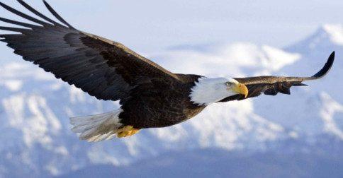 144.000 águias despertando para o voo