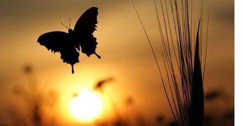 Os Anjos - lembre de que cada dia é de fato, um presente