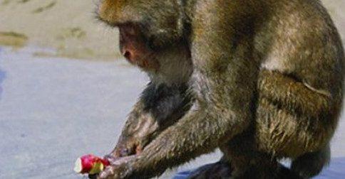 A massa crítica e o centésimo macaco