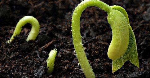 As sementes de um maravilhoso futuro