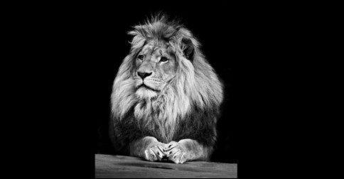 Eu confio que vocês todos são leões