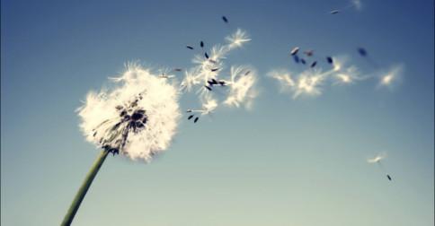 Esvazie-se e torne-se o vento
