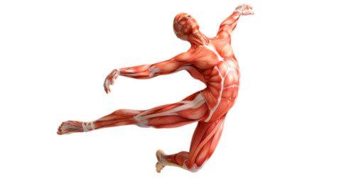 O corpo durante a Ascensão