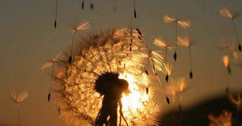 Dando asas aos nossos desejos