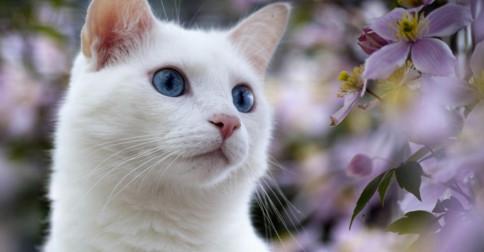 O simbolismo dos gatos brancos