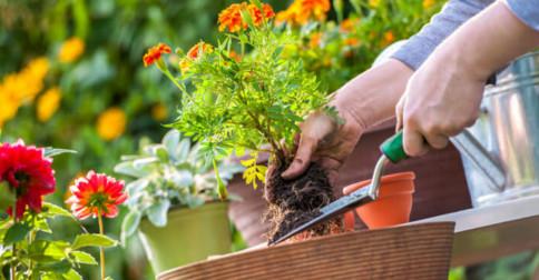 Pense na sua vida como um jardim