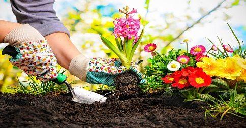 Se você fosse cultivar um jardim, o que faria