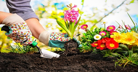 Se você fosse cultivar um jardim, o que faria?