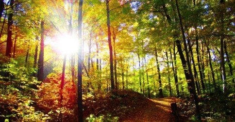 Todos os caminhos levam para Luz