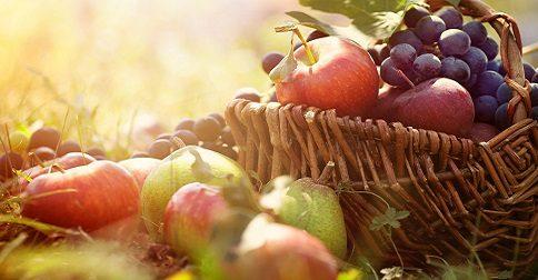Está chegando o momento de colher os frutos