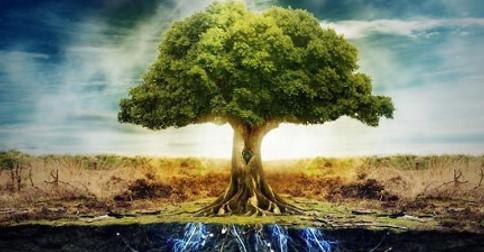 Árvore celta – significado da vida