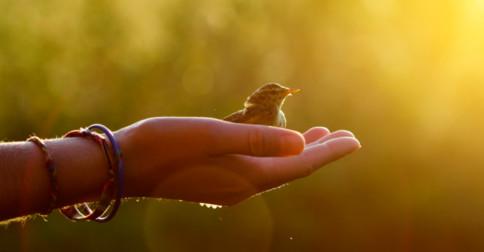 O que é fazer o bem a si e aos outros