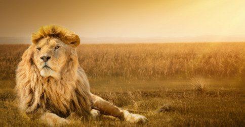 O ROAR de um leão corta o barulho e expõe a verdade