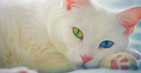 O significado do sonho do gato branco
